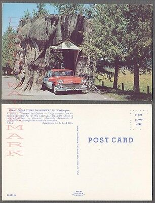 Vintage Postcard 1958 Chevrolet Chevy Car Tree Stump Arlington Washington 768223