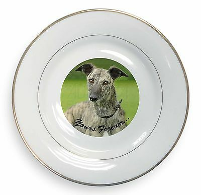 Greyhound Dog 'Yours Forever' Gold Rim Plate in Gift Box Christmas Pr, AD-LU7yPL