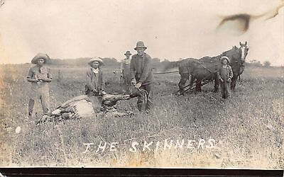 Real Photo Postcard The Skinners, Farmers Skinning a Cow in a Field~111868