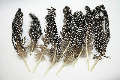 Trimits Natural Guinea Fowl Feathers x 12 Sewing Craft Wedding Floral