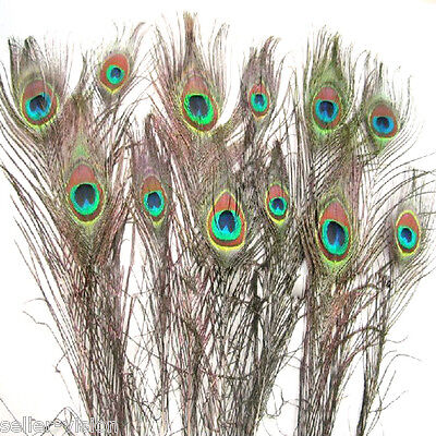 """12 Natural Peacock Eye Feathers Small 10-12"""" ideal for Craft Arts Hat Decoration"""