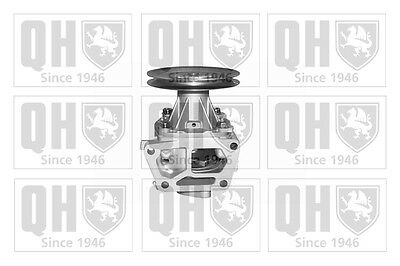 Genuine Qh Water Pump Spare Part Fits Fiat Tipo Uno Tempra S.W. Qcp2696Bh