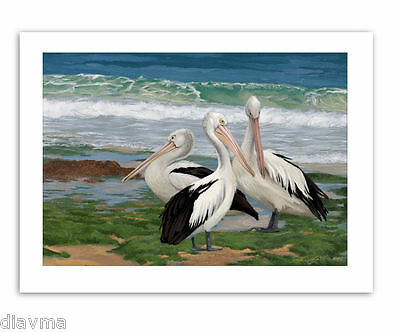 © ART -  Illustration Pelican Water Bird Wildlife Original Artist print by Di