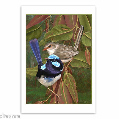 © ART - Australian Superb Blue Fairy Wren Bird Original nature print by Di