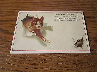 Auburn NY Cat Mouse Vintage Trade Card Clark & Talladay 79 Genesee St Cute