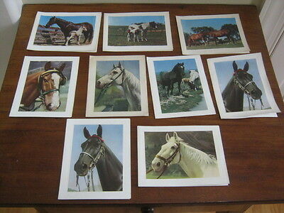 Vtg 9 mid century note cards, horse color photographs prints, unused.