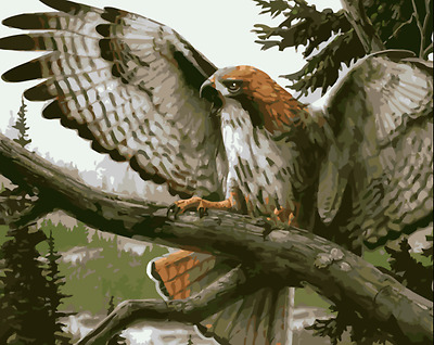 Framed Painting by Number kit The Hawk On The Tree Eagle Bird Wild Animal MB7106