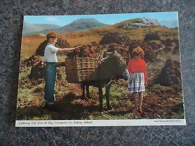 Postcard Children Collecting Turf From Bog Connemara Co Galway Ireland  1970S