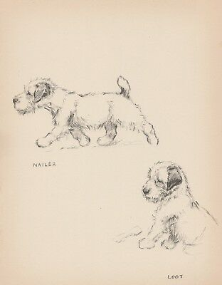 1930s Antique SEALYHAM Print Original Vintage Puppy Print Pet Art 2204
