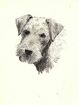 1935 Antique LAKELAND Terrier Print Gallery Wall Gift for Dog Lover CFW 2226