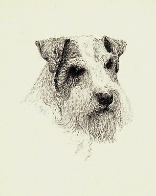 1935 Antique SEALYHAM TERRIER Print Dog Art Print Gift for Dog Lover CFW 2231