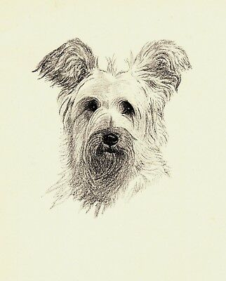 1935 Antique SKYE TERRIER Print Dog Art Print Gift for Dog Lover CFW 2232