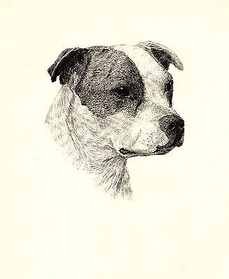 1935 Antique STAFFORDSHIRE BULL TERRIER Print Gift for Dog Lover CFW 2233