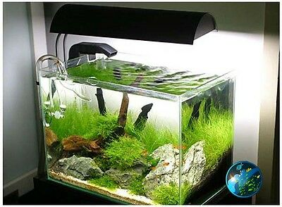 Xmas moss -for live freshwater tropical fish AZ