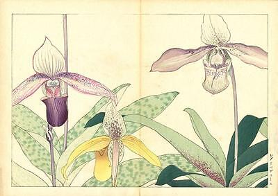 1917 Antique Tanigami Konan Original Japanese Woodblock Print Cypripedium Orchid