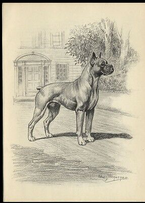 Boxer Dog: after Painting by Edwin Megargee: Authentic 1953 Book Illustration