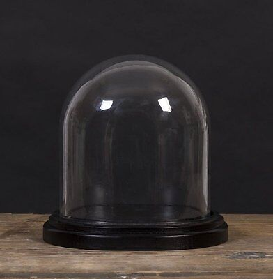 Jay BIOLOGICA BELL JAR Decorative GLASS DOME & Wood BASE Small 17cm Tall