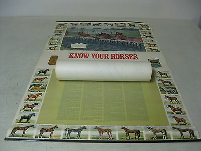 Vintage Absorbine Hooflex Know Your Horses Pictorial By Hoe Godfrey Poster