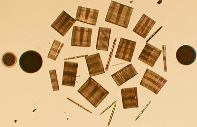 27 Arranged Diatoms Microscope Slide by E. Thum
