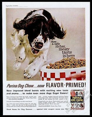 1962 Springer Spaniel photo Purina Dog Chow vintage print ad