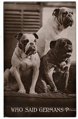 Early  Patriotic Bulldogs  WHO SAID GERMANS   Photo  Postcard