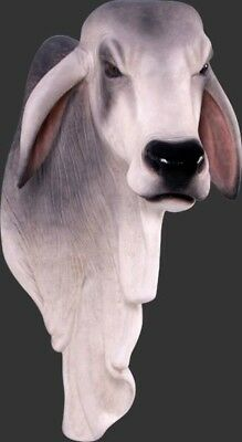 Braham Shoulder Cattle Cow Bull Mount Wall Statue - Free Ship
