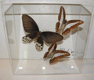 Butterfly Collection Of Three(3) In Plexiglass Display~Signed Pruyton 1991