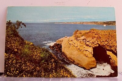 California CA La Jolla Goldfish Pont Garabaldi Perch Postcard Old Vintage Card