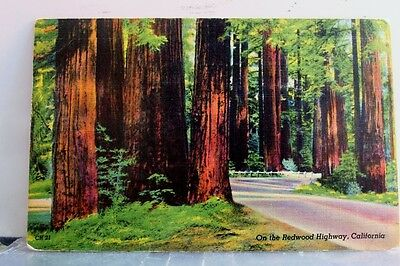 California CA Redwood Highway Postcard Old Vintage Card View Standard Souvenir