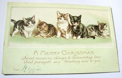 Christmas Greeting Postcard Kittens Cats 1905