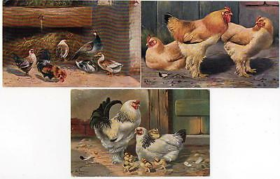 3 Early Chickens Hens Poultry ERNEST NISTER   Postcards