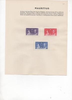 Mauritius 1937  Coronation issue set of 3 Mint stamps on album page
