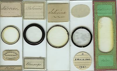 5 Salicine Polariscope Chemistry Microscope Slides by Various Makers