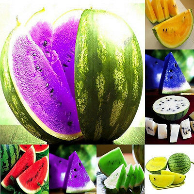 10pcs Rare Watermelon Fruit Seeds Delicious Vegetables Plants Seed Home Garden
