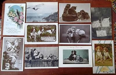 VINTAGE GREETINGS POSTCARDS, ANIMALS, c1910-30,LOT OF 10 CARDS (12)