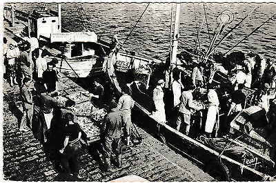 Quiberon, Britanny - Unloading of sardines - post card 1957