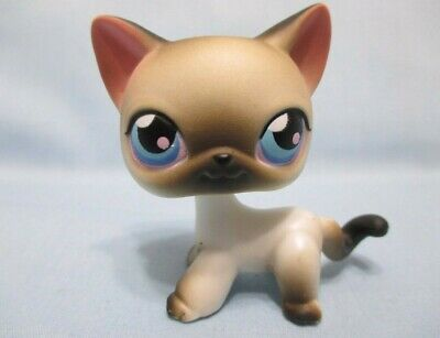 Littlest Pet Shop Cat Siamese Shorthair 5 w Free Accessory Authentic