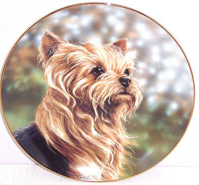 Yorkshire Plate Terrier Anticipation Collector Danbury Yorkie Dog Pet