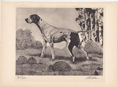 1931 Bert Cobb dry point etching print-Pointer dog-McTyre