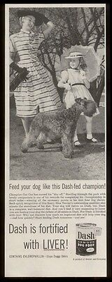 1953 champion Kerry Blue Terrier photo Dash dog food vintage print ad