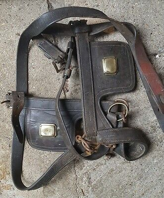 Brown leather with brass highlights    Shire Heavy  Head Harness and chest strap