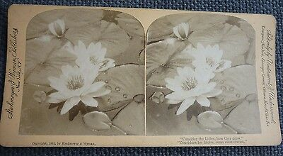Stereoview Nice Early Image Botanical Flowers Nature Consider the Lilies