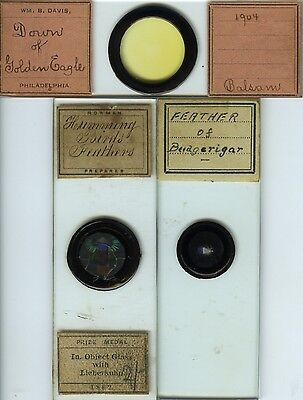 3 Bird Feather Microscope Slides by Various Makers