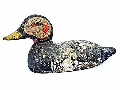 """Animal Trap Co. Duck Decoy c.1918-1938, Rare Endangered """"Spectacled Eider"""""""