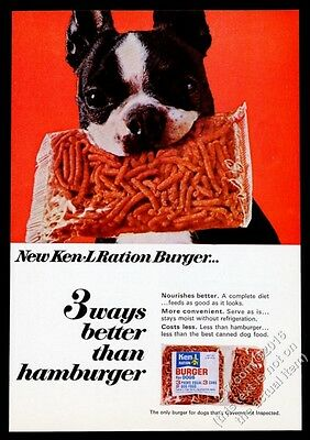 1967 Boston Terrier cute photo Ken-L Burger dog food vintage print ad