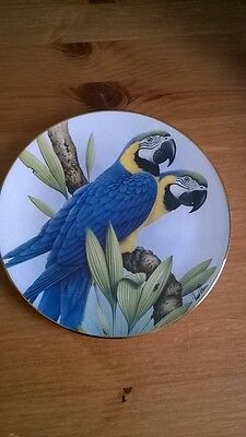 Blue & Gold Macaw Bone China Plate. Ltd Edition. Charity Sale