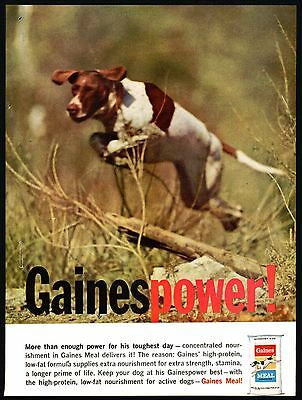 1960 POINTER in Field Gaines Dog Food Vintage Photo AD