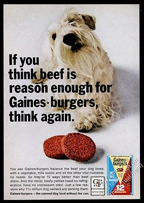1966 Sealyham Terrier dog photo Gaines Burgers vintage print ad