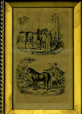 1834 Guerin Antique Engraving Print Plate Natural History Vintage Framed Horses