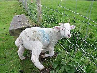 Horn Harness For Lamb Sheep & Goats Prevents Getting Stuck In Fence Netting